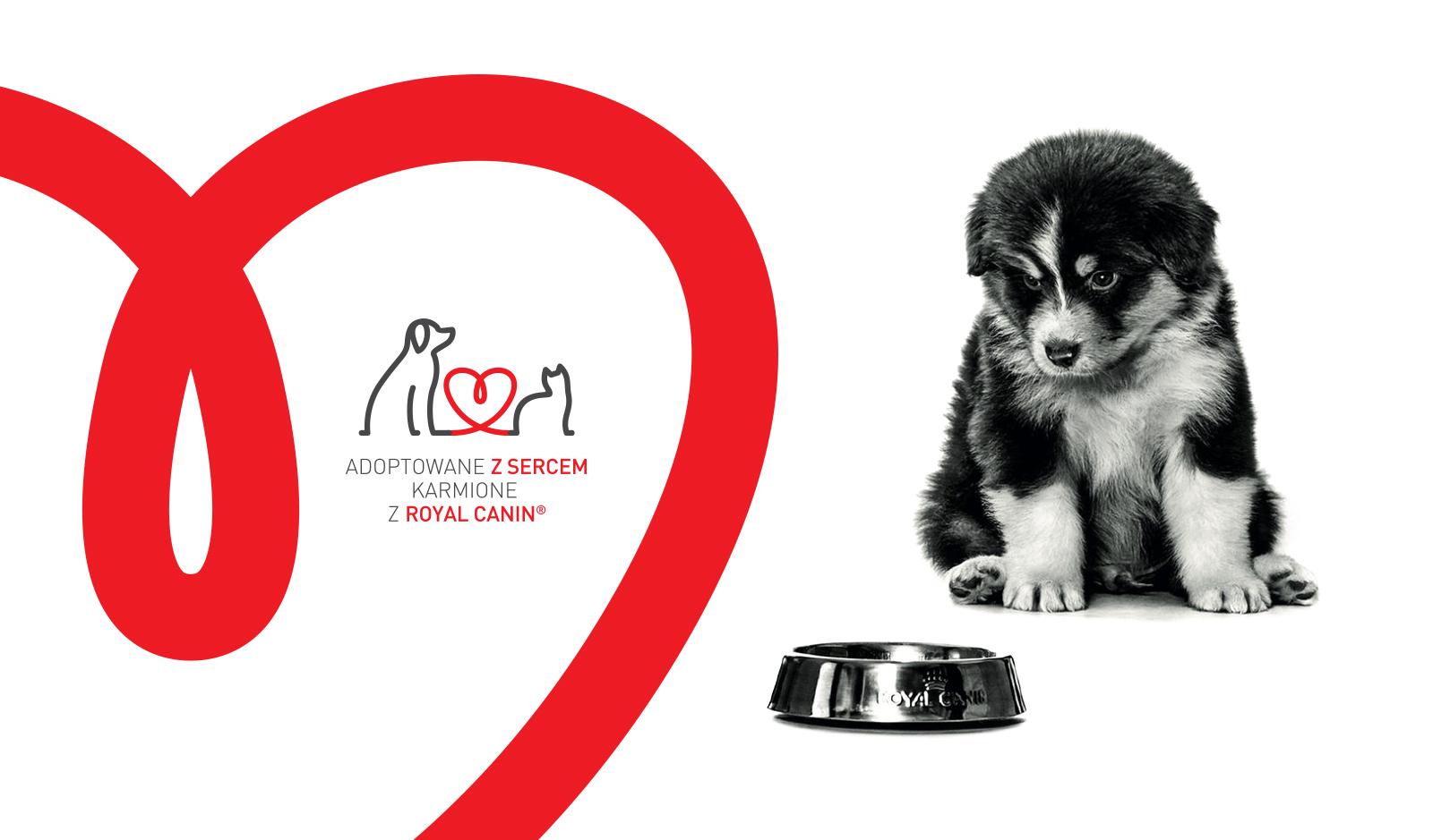 Adoptowane z sercem, karmione z Royal Canin®